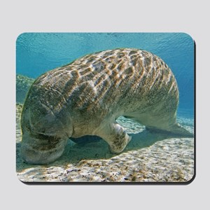 Florida manatee feeding Mousepad