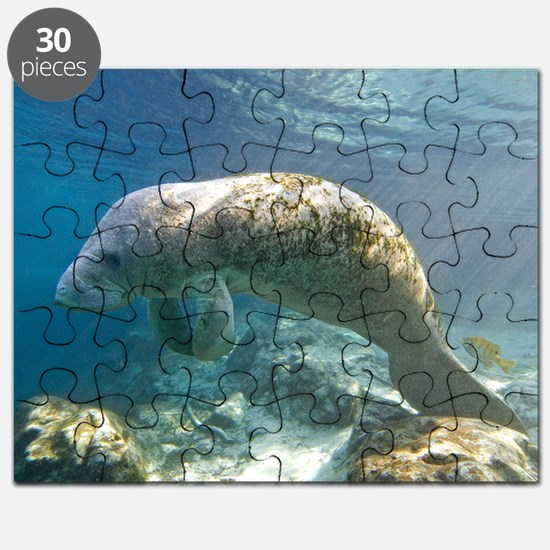 Florida manatee swimming Puzzle