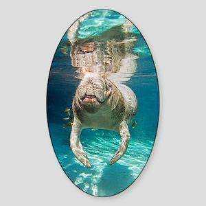 Florida manatee swimming Sticker (Oval)