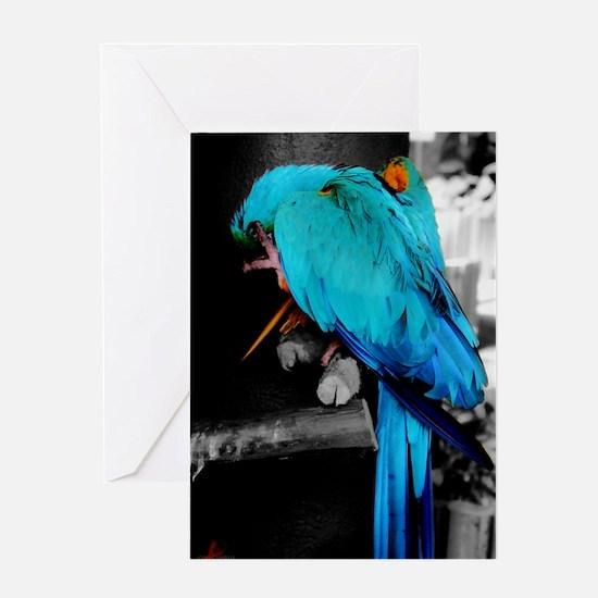 Bashful Macaw Greeting Card