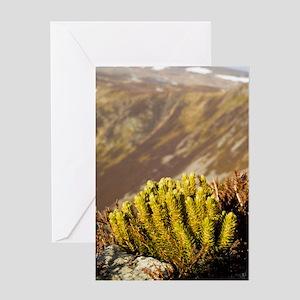 Fir clubmoss (Huperzia selago) Greeting Card