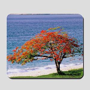 Flamboyant tree Mousepad