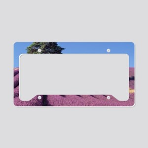 Field of lavender License Plate Holder
