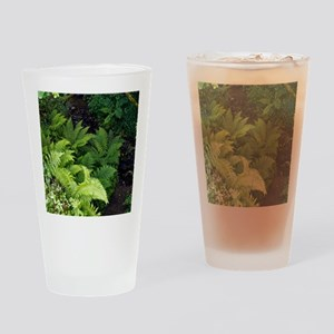 Ferns by a stream Drinking Glass