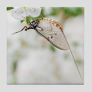 Female mayfly Tile Coaster