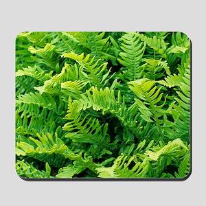 Fern leaves Mousepad