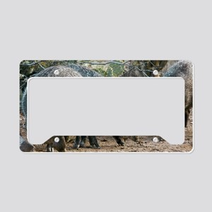 Family of Collared Peccaries License Plate Holder