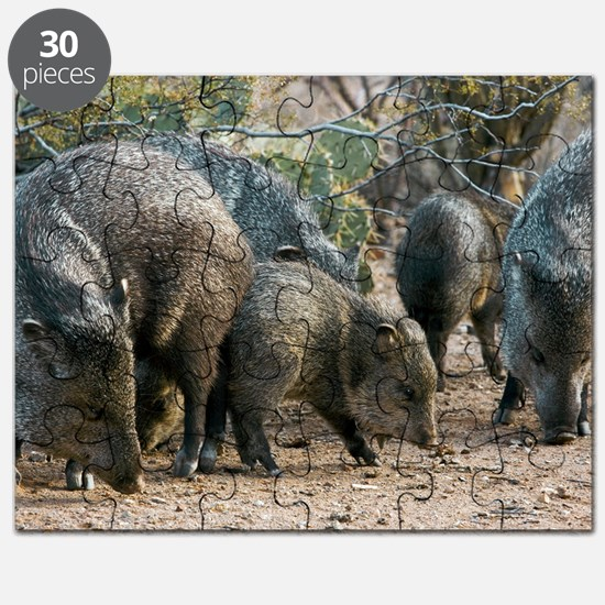 Family of Collared Peccaries Puzzle