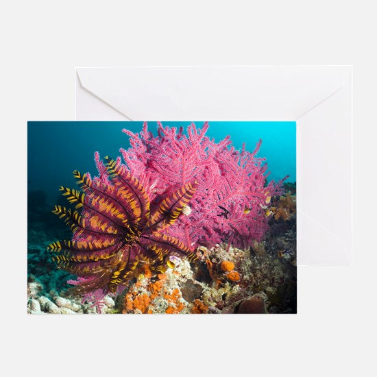 Featherstar on gorgonian coral Greeting Card