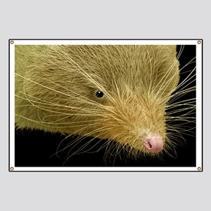 Face of a common shrew, SEM Banner