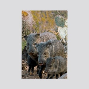 Family of Collared Peccaries Rectangle Magnet