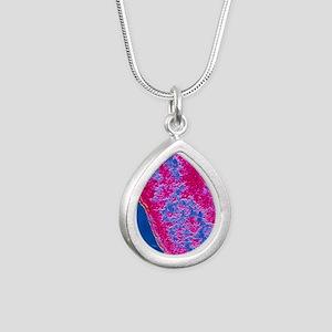 False-colour TEM of E. c Silver Teardrop Necklace