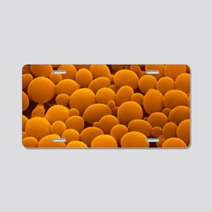 False-col SEM of yeast cell Aluminum License Plate