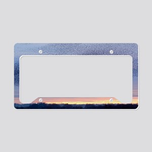 European starling flock License Plate Holder