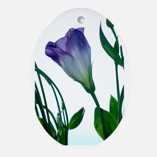 Eustoma lisianthus Oval Ornament