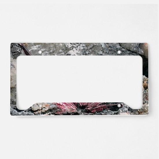 Erythrite crystals License Plate Holder
