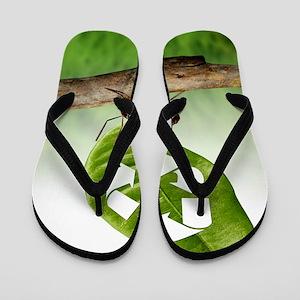 Environmental care, conceptual image Flip Flops
