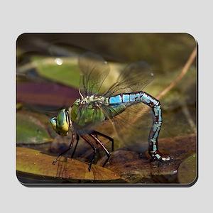 Emperor Dragonfly Mousepad