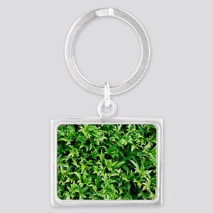 English ivy (Hedera helix 'Anit Landscape Keychain