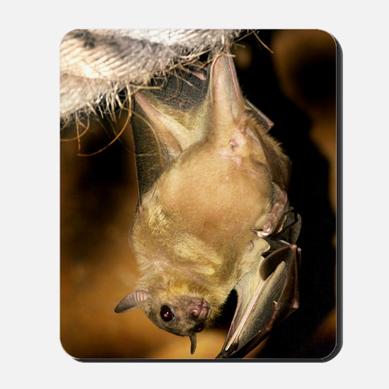 Egyptian rousette bat Mousepad
