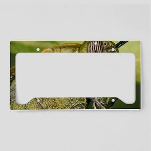 Egyptian Grass Hopper License Plate Holder