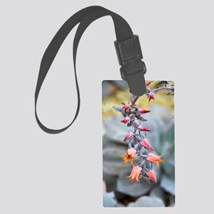 Echeveria 'Afterglow' flowers Large Luggage Tag