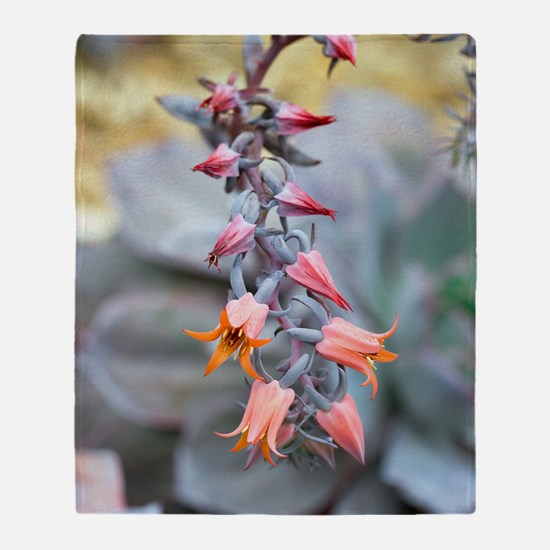 Echeveria 'Afterglow' flowers Throw Blanket