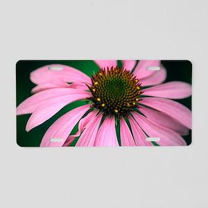 Echinacea purpurea flower Aluminum License Plate