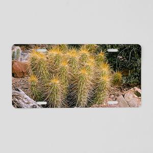 Echinocereus nicholii Aluminum License Plate