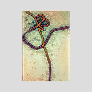 Ebola virus particles, TEM Rectangle Magnet