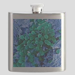 E. coli bacteria, SEM Flask