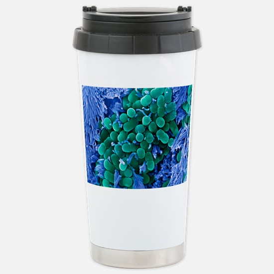 E. coli bacteria, SEM Stainless Steel Travel Mug