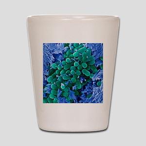 E. coli bacteria, SEM Shot Glass