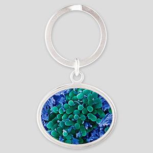 E. coli bacteria, SEM Oval Keychain