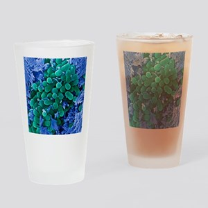 E. coli bacteria, SEM Drinking Glass