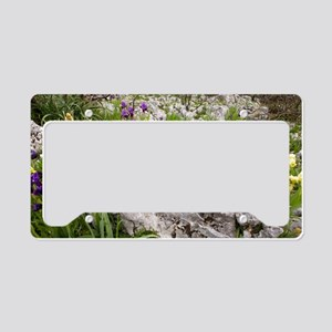 Dwarf Bearded Iris (Iris lute License Plate Holder