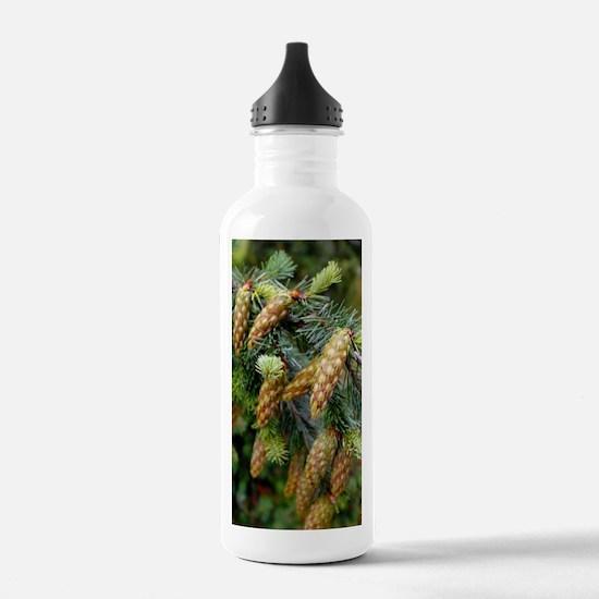 Douglas fir cones Water Bottle