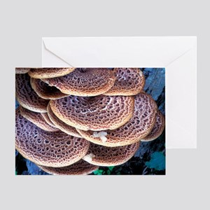 Dryad's saddle fungi Greeting Card
