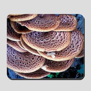 Dryad's saddle fungi Mousepad