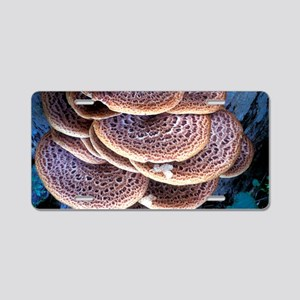 Dryad's saddle fungi Aluminum License Plate