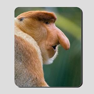 Dominant male proboscis monkey Mousepad