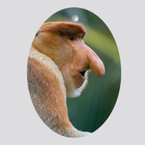 Dominant male proboscis monkey Oval Ornament