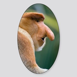 Dominant male proboscis monkey Sticker (Oval)