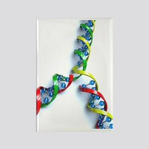 DNA replication, artwork Rectangle Magnet