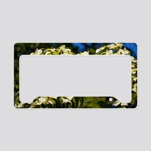 Dogwood (Cornus 'Norman Hadde License Plate Holder