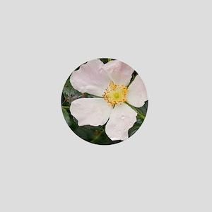 Dog rose (Rosa canina) Mini Button