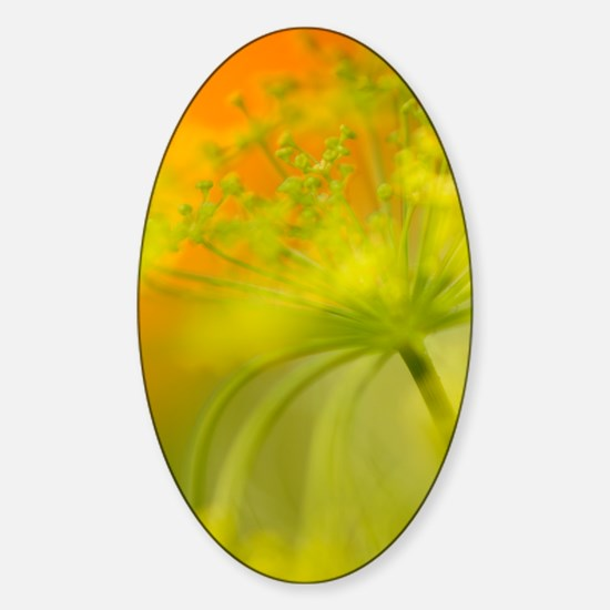 Dill (Anethum graveolens) Sticker (Oval)