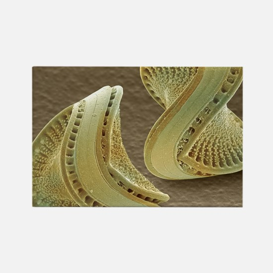 Diatoms, SEM Rectangle Magnet