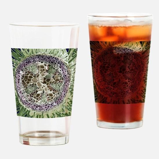 Dicotyledon plant stem, SEM Drinking Glass