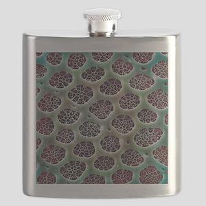 Diatom alga, SEM Flask